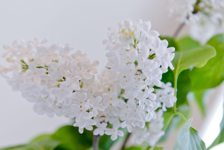 kwiaty komunijne